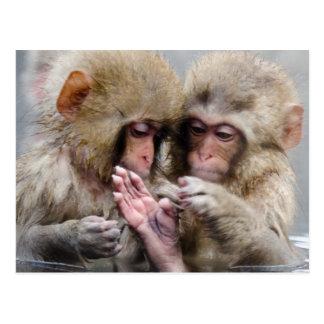 温泉、日本の小さい猿 ポストカード