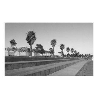 港公園の樹木限界線 フォトプリント
