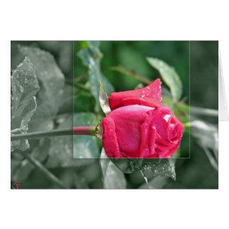 湖による花-赤いバラの芽 カード
