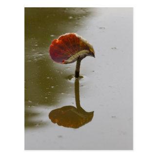 湖の《植物》スイレンの葉 ポストカード