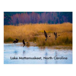 湖のMattamuskeetの飛んでいるなガチョウの郵便はがき ポストカード
