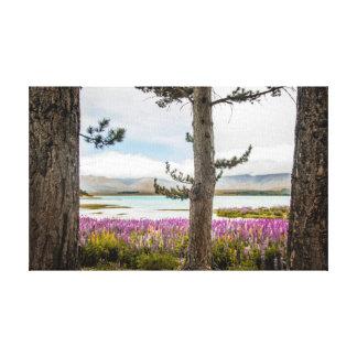 湖のTekapoのルピナス属 キャンバスプリント