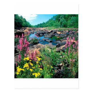 湖のWisconsin川の氷河期の予備ウィスコンシン ポストカード
