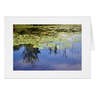 湖キャロライン カード