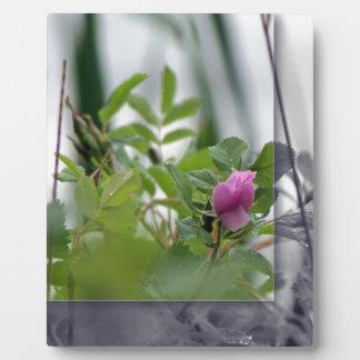 湖-ピンクによるプラクの花 フォトプラーク
