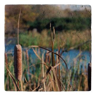 湿地帯の石Trivetのネコヤナギ トリベット