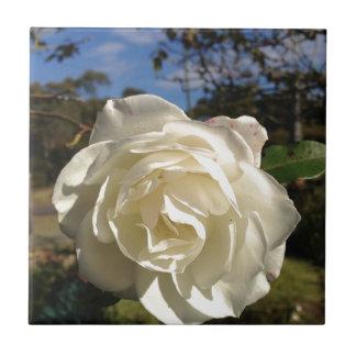満開の白いバラ タイル