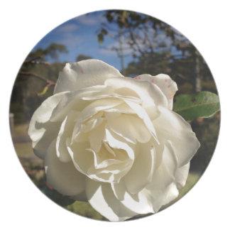 満開の白いバラ プレート