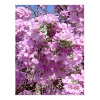 満開の紫色賢人 ポストカード