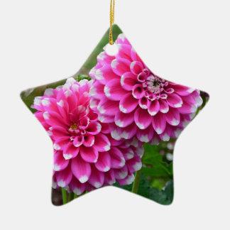 満開の美しいピンクのダリア 陶器製星型オーナメント