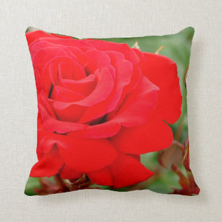 満開の美しく赤いバラ クッション