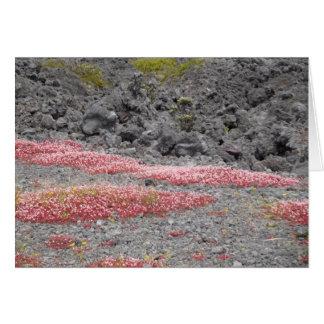 溶岩原、ハワイの野生の花 カード