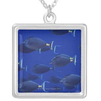 滑らか頭のunicornfishの学校 シルバープレートネックレス