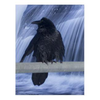 滝にとまるワタリガラス ポストカード