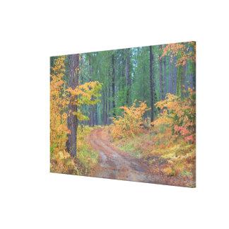 滝2の森林の秋色 キャンバスプリント