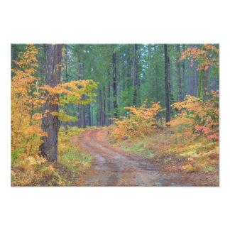 滝2の森林の秋色 フォトプリント