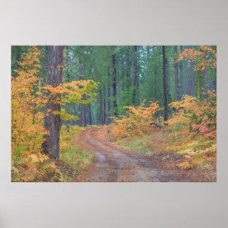 滝2の森林の秋色 ポスター