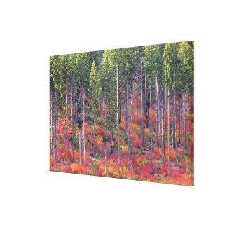 滝3の森林の秋色 キャンバスプリント