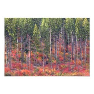 滝4の森林の秋色 フォトプリント