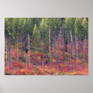 滝5の森林の秋色 ポスター