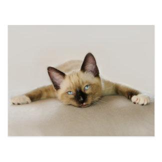 滞在のカッコいいは子ネコを冷やし、 ポストカード