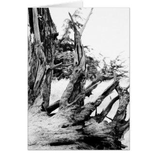 漂流木 カード