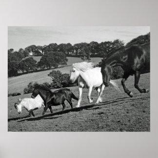 演劇の馬 ポスター