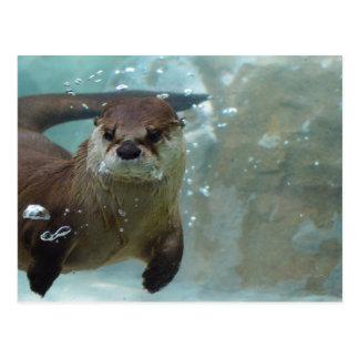 澄んで青いプールのかわいいブラウンのカワウソの水泳 ポストカード