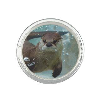澄んで青いプールのかわいいブラウンのカワウソの水泳 指輪