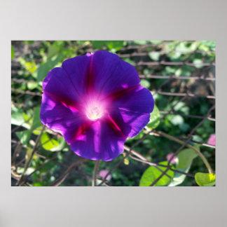 澄んな紫色の花びら ポスター