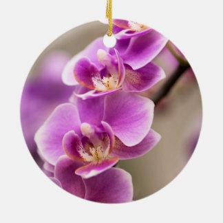 濃いピンクのコチョウランの蘭の花鎖 セラミックオーナメント