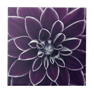 濃紫色のダリアの花 タイル