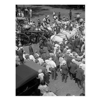 火の馬の退職パーティー1925年 ポストカード