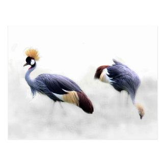 灰色によって戴冠させるクレーン(Balearicaのregulorum)郵便はがき ポストカード