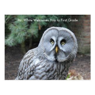 灰色のフクロウの歓迎学生のカスタムの郵便はがき ポストカード