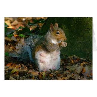 灰色のリス-ビュート公園、カーディフ、ウェールズ、イギリス カード