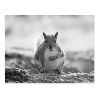 灰色のリス-ビュート公園、カーディフ、ウェールズ、イギリス ポストカード