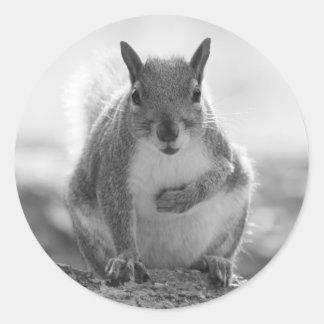 灰色のリス-ビュート公園、カーディフ、ウェールズ、イギリス ラウンドシール
