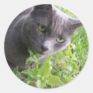 灰色の夏の子猫猫の子ネコ ラウンドシール