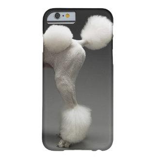 灰色の背景のプードルのHaunches、 iPhone 6 ベアリーゼアケース