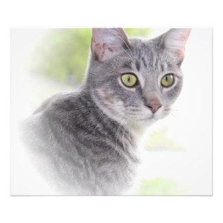 灰色の虎猫CATのプリント フォトプリント