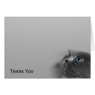 灰色の青い目を持つ灰色のペルシャ カード