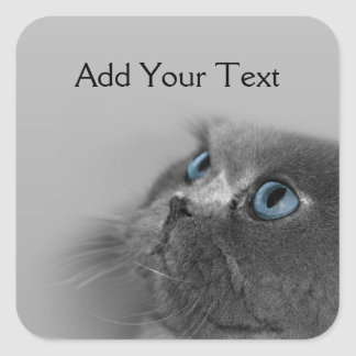 灰色の青い目を持つ灰色のペルシャ スクエアシール