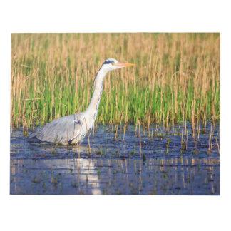 灰色の鷲、池で、cinerea ardea ノートパッド