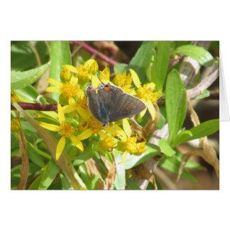 灰色のHairstreak蝶 カード