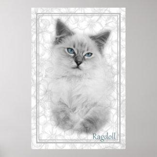 灰色のragdollポスター ポスター