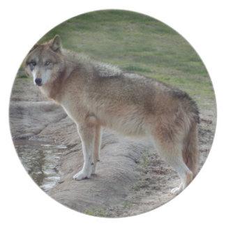 灰色オオカミ11 プレート