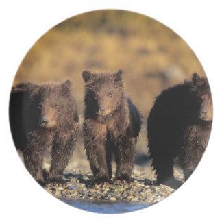 灰色グマ、ヒグマ、幼いこども、Katmaiの国民 プレート