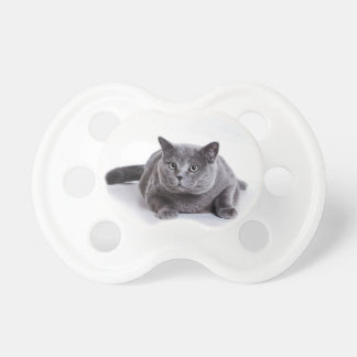 灰色猫 おしゃぶり