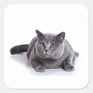 灰色猫 スクエアシール